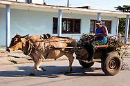 Hoofing it in Cueto, Holguin, Cuba.