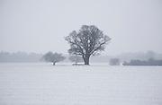 Winter landscape oak trees and fields in snow, Shottisham, Suffolk, England