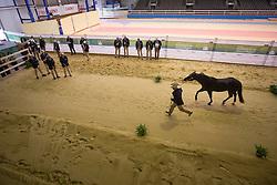 Doug Allen, (GBR), Hangten Shiner - Horse Inspection Reining  - Alltech FEI World Equestrian Games™ 2014 - Normandy, France.<br /> © Hippo Foto Team - Dirk Caremans<br /> 25/06/14