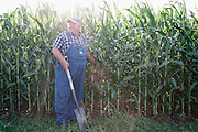 David Brandt emerges from his corn field with a soil sample on his 1,200-acre farm in central Ohio. Brandt grows corn, soy, wheat and hay on his farm that he runs with his wife, Kendra, in Carroll, Ohio. He has been practicing no-till farming since 1971, and has planted cover crops, such as winter peas, cabbage, clover and millet, which return nutrients to the soil, since 1978. His return to these traditional farming practices have allowed Brandt to drastically reduce his usage of fertilizers and pesticides, has increased the soil fertility and strengthened the land's tolerance to drought and excessive rain.