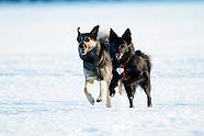 Koirat - the Dogs