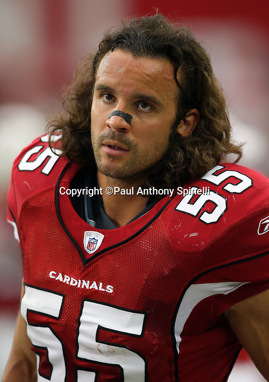 GLENDALE, AZ - OCTOBER 12: Linebacker Travis LaBoy #55 of the Arizona Cardinals looks on during the game against the Dallas Cowboys at University of Phoenix Stadium on October 12, 2008 in Glendale, Arizona. The Cardinals defeated the Cowboys 30-24. ©Paul Anthony Spinelli *** Local Caption *** Travis LaBoy