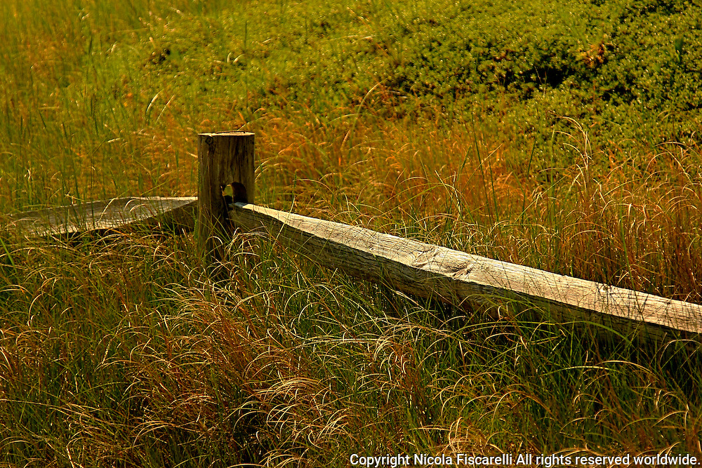 The fence is a dividing line between sand dunes and grassy wetland in Cape Cod   National Seashore Park Massachusetts.