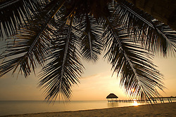 Central America, Belize,  Stann Creek District,  Hopkins, Jaguar Reef Lodge, sunrise on beach  through palm fronds  PR