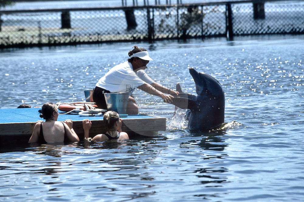 A trainer works with a bottle nose dolphin at the Dolphin Research Center as tourists watch June 27, 1996 in Marathon Key, FL.  The center is where the original Flipper was trained and specializes in returning trained dolphins to the wild.