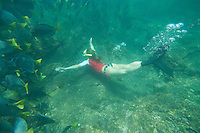 Young woman snorkeling with Razor Fish in the Galapagos Islands, Ecuador.