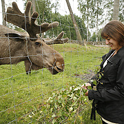 Laganland, also called Moose Park or Algpark, is a moose-lovers paradise near Langan, Sweden. On the road from Stockholm to Helsingborg. MR Model Release<br /> Photography by Jose More