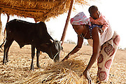 Mariam Koanda carries her 15-month-old son Abdul as she feeds cattle in the village of Nabitenga, Plateau-Centre region, Burkina Faso on Tuesday March 27, 2012.