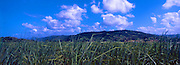 The Canefields outside Port Douglas