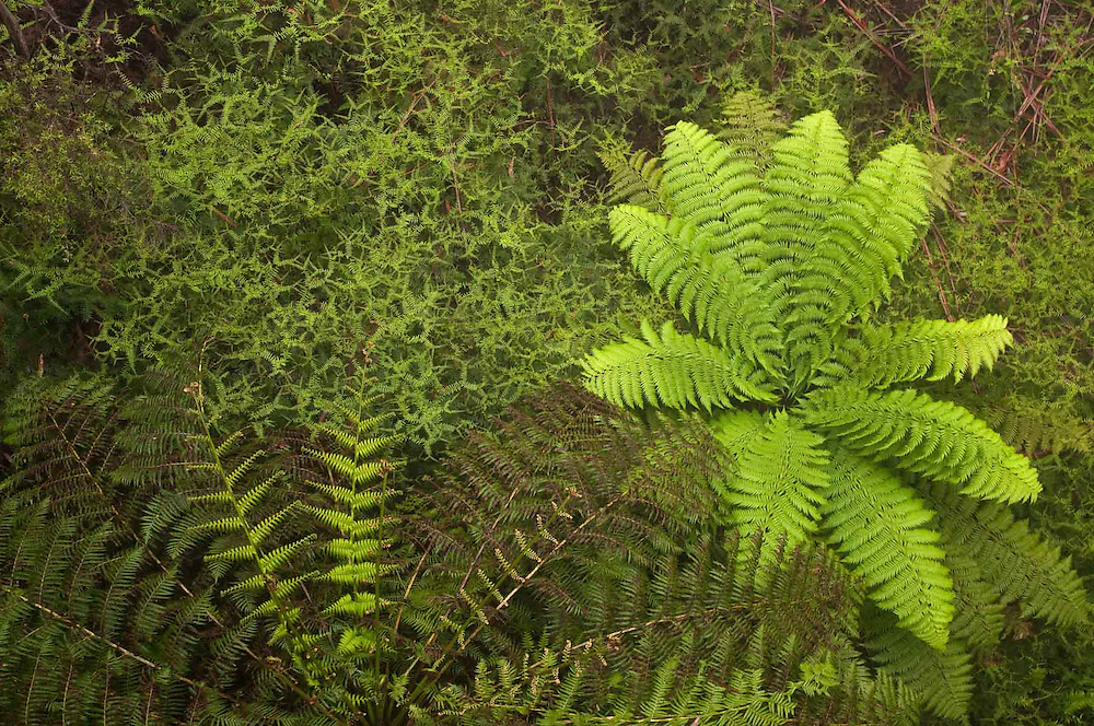 Tree Fern Array