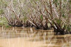 Moulamen Swamp