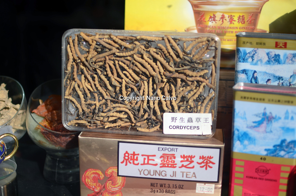 Dry Cordyceps in chinese shop, Chinatown, New York