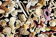 [Digital focus stacking] The white carbonate sand from Raja Ampat, Indonesia, is generated by a vast diversity of organisms: e.g. foraminifera, sponges, brachiopods, echinoderms, bryozoa and mollusks. Diagonal of frame approx. 8 mm | Im weißen Kalksand von Raja Ampat, Indonesien, finden sich die Überreste von einer riesigen Vielfalt an Organismen: z. B. Foraminiferen,  Sklerite von Schwämmen und Weichkorallen, Molluskenschalen, Kalkalgen, Bryozoen, Crinoiden und Skelettreste von Stachelhäutern.  Kalksand ist nicht nur schön anzusehen, er dient auch als natürliche CO2 senke und ist dadurch wichtig für das klobale Klima. (Indonesien)