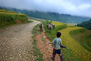 A young Vietnamese boy moves his water buffalo along a rural road toward his home below.