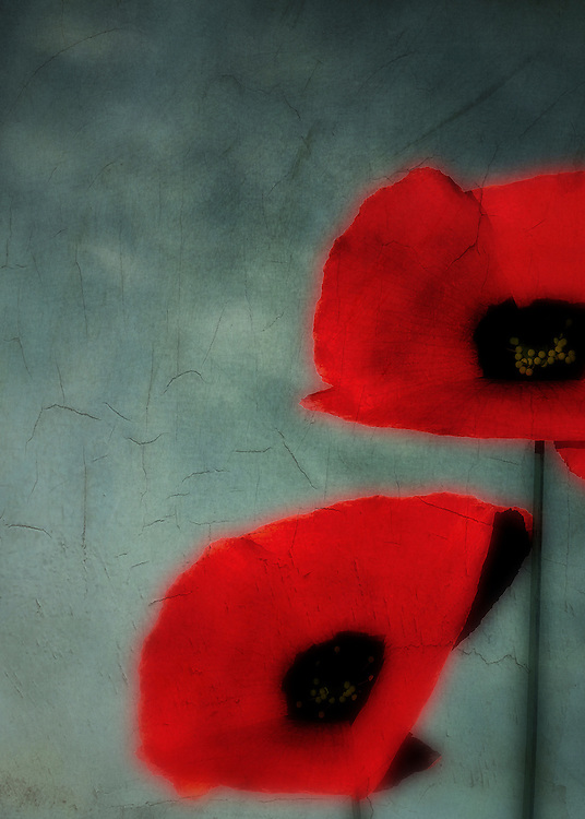 A painting of two poppies