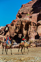 Bedouin men on camels, Petra Archaeological Park (a UNESCO World Heritage Site), Petra, Jordan.