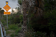 """""""Panther Crossing"""" sign on Tamiami Trail, Florida Route 41, Big Cypress National Preserve, Florida"""