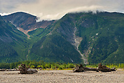 Driftwood amd mountaine along the shoreline of the Skeena River<br />East of Prince Rupert<br />British Columbia<br />Canada