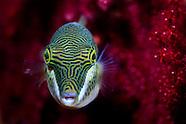Fish of New Zealand.