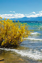 """Kings Beach, Lake Tahoe 1"" - Photograph of fall colors along the shore of a windy and wavy Kings Beach, Lake Tahoe."