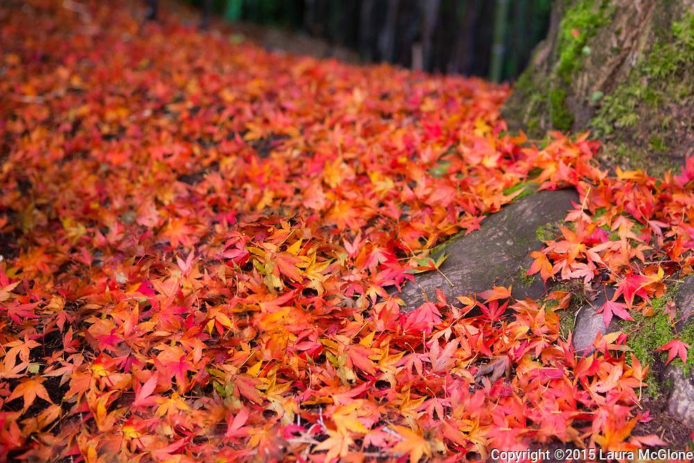 Maple Leaves Blanket the Ground, British Columbia Canada