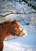 Pretty Pony...