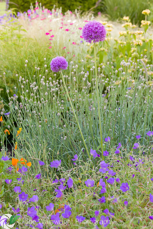 Bluebell Cottage Gardens at Dutton, Cheshire, comprises a number of sections linked together by winding paths. These include deep and lush herbaceous borders, imaginatively planted in a contemporary style by owner Sue Beasley. There is also a wildflower meadow, a small orchard, a pond and grasses garden. The garden is pictured here in June.
