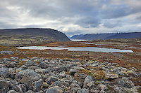 The view from Dynjandisheiði road in West fiords of Iceland. A small pond with Whooper Swans taking flight. West fiords of Iceland.