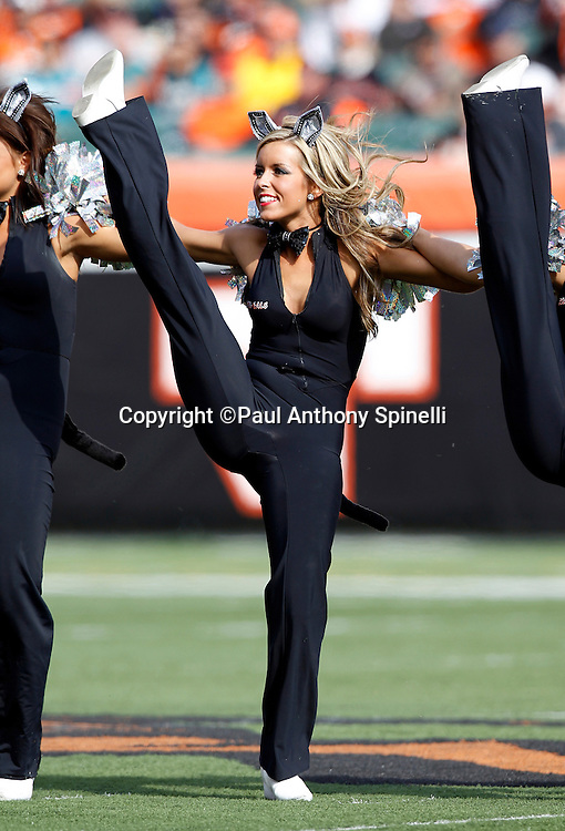 The Cincinnati Bengals Ben-Gals cheerleaders smile during a dance routine during the NFL week 8 football game against the Miami Dolphins on Sunday, October 31, 2010 in Cincinnati, Ohio. The Dolphins won the game 22-14. (©Paul Anthony Spinelli)