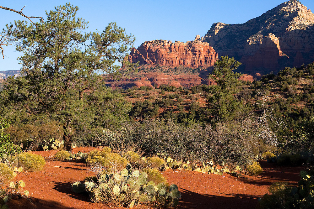 Sedona comes to life! The minute the sun was up, everything changed. Colors of the soil and vegetation changed... warmth and light was everywhere.