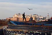 ESSAOUIRA, MOROCCO - MAY 7: A low angle view of boats in the harbour on May 7, 2009 in Essaouira, Morocco. A man standing on the moored wooden boats gazes towards the sunlit ramparts of the town as a bird flies overhead. Essaouira, on the windswept Atlantic coast of Morocco, was re-built in the 18th century by French architect Theodore Cornut to the orders of Sultan Ben Abdallah. Surrounded by ramparts, it is a charming small town now becoming more popular with tourists. Photo by Manuel Cohen