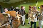 Vienna, Austria. Veterinärmedizinische Universität Wien (Vetmeduni Vienna).<br /> Haflingers at the Department/Clinic for Companion Animals and Horses (Department/Universitätsklinik für Nutztiere und öffentliches Gesundheitswesen in der Veterinärmedizin).<br /> FREE ONLY FOR VETMEDUNI INTERNAL USE - ALL OTHERS MUST ACQUIRE PUBLICATION RIGHTS FROM HEIMO AGA!