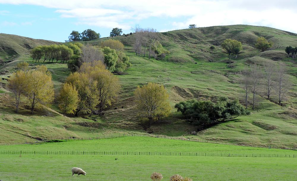 Rolling countryside, farmland, Wairoa, New Zealand, Sunday, May 05, 2013. Credit:SNPA / Ross Setford