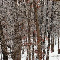Winter in the Ozarks