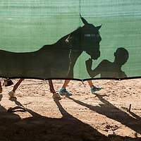 USA, New Mexico, Albuquerque, Shadow of trainer walking horse back to paddocks after race at The Downs at Albuquerque race track