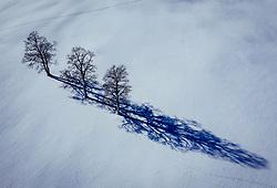 THEMENBILD - Bäume auf einem schneebedeckten Feld werfen Schatten auf die Landschaft, aufgenommen am 16. Januar 2019 in Kaprun, Oesterreich // Trees on a snowy field cast shadows on the landscape in Kaprun, Austria on 2019/01/15. EXPA Pictures © 2019, PhotoCredit: EXPA/ JFK