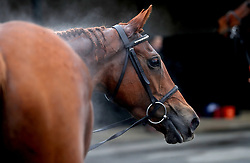 A general view of a horse cooling down during the Midlands Raceday at Warwick Racecourse.
