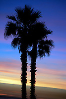 5 November 2006: Two palm trees silouetted against blue after Santa Ana winds produced a warm hot pink sunset during low tide during a fall winter day.  Graphic art sky with texture and colors.  Stock Art.<br />