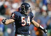 CHICAGO - OCTOBER 16:  Linebacker Brian Urlacher #54 of the Chicago Bears celebrates after one of his two sacks against the Minnesota Vikings at Soldier Field on October 16, 2005 in Chicago, Illinois. The Bears defeated the Vikings 28-3. ©Paul Anthony Spinelli *** Local Caption *** Brian Urlacher