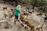 Terryl Just is met by a group of excited  dogs as she enters the Yangon Animal Shelter.