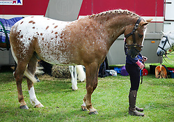 © Licensed to London News Pictures.29/07/15<br /> Borrowby, UK. <br /> <br /> A woman stands with her horse at the Borrowby Country Show and Gymkhana in North Yorkshire.<br /> <br /> Photo credit : Ian Forsyth/LNP