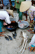 Jimbaran Beach. Fish market. Mini sharks..