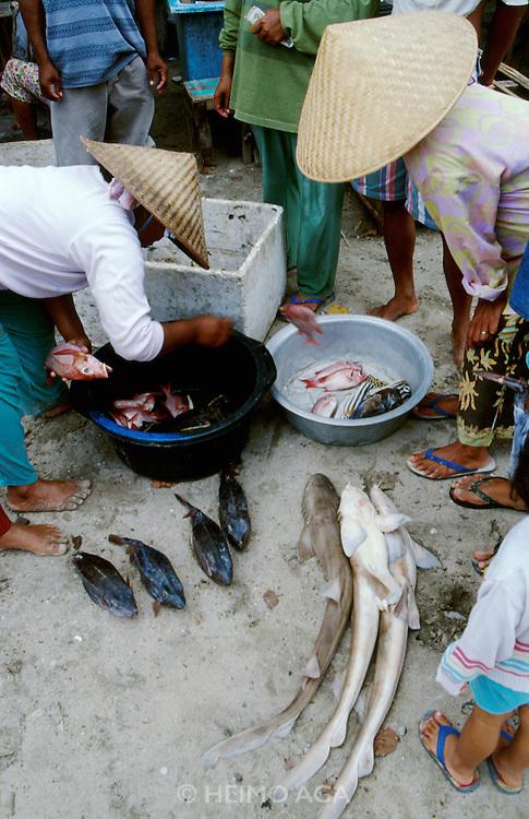 Jimbaran Beach. Fish market. Mini sharks..