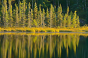 Evergreen trees reflected in the Lily Pond<br /> Whiteshell Provincial Park<br /> Manitoba<br /> Canada
