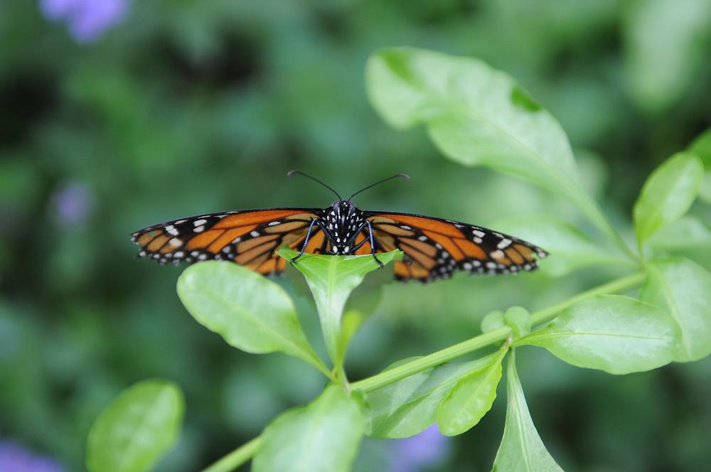Brookside Gardens<br /> Wings of Fancy