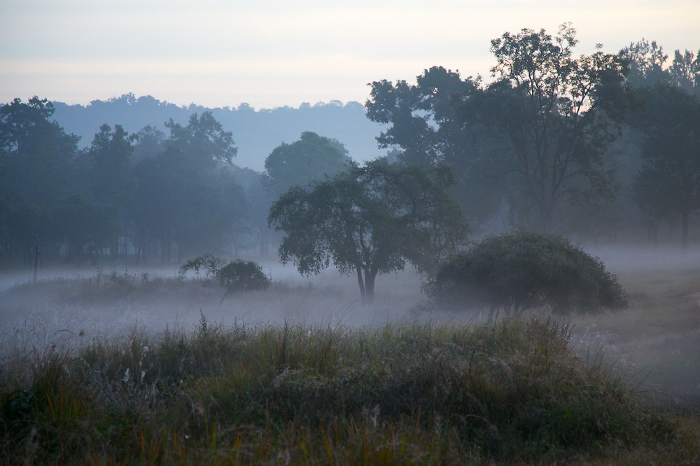 Morning Mist in Kanha National Park, India