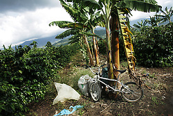 A bike sits next to a tree at the end of the day at the La Cruz coffee farm. The tourism industry is slowly emerging in Quindio, the Colombian coffee country.  Old coffee haciendas have been turned into new hotels catering to tourists.  The countryside, some of the most beautiful in the country, is a popular weekend getaway spot where visitors can participate in a variety of outdoor activities as well as learn about coffee production.