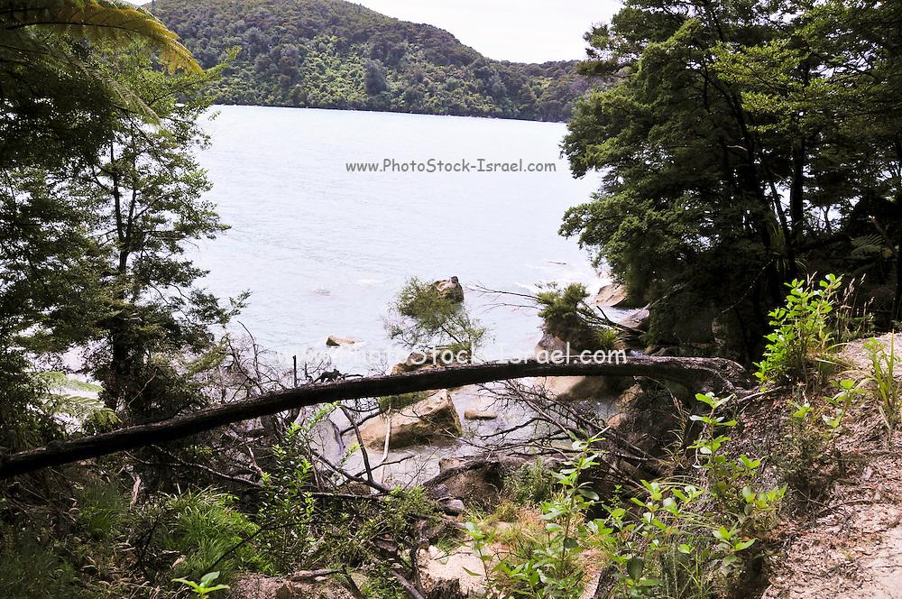 New Zealand, South Island, Nelson, Bark Bay Abel Tasman National Park
