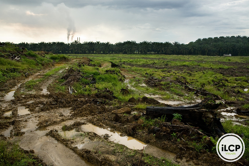 African Oil Palm (Elaeis guineensis) plantation and clear cut for new planting with factory in background, Sabah, Borneo, Malaysia