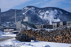 Logs waiting to be processed at Pulp and Paper of America's Berlin, NH paper mill. Northern Forest.  Berlin, NH